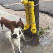 Comerciante instala dispositivo com comida e água para animais de rua em SP