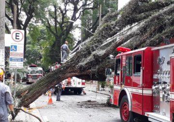 Árvore de grande porte cai sobre restaurante na Zona Sul de SP