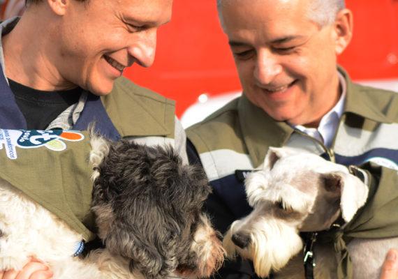 Governo Cria Programa Estadual de Proteção Aos Animais