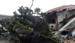 Fotos: Temporal derruba árvores e danifica prédio de universidade