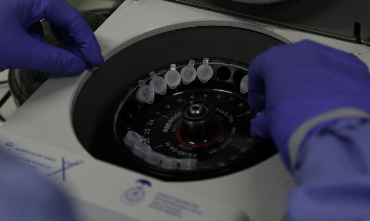 Diagnóstico laboratorial de casos suspeitos de Covid-19, o novo Coronavírus, realizado pelo Laboratório de Vírus Respiratório e do Sarampo do Instituto Oswaldo Cruz (Josué Damacena/IOC Fiocruz)