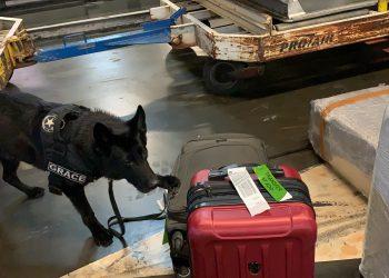 Cão de faro identifica bagagem com droga (Receita Federal)