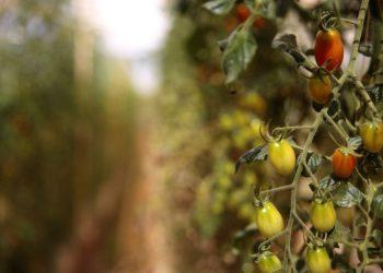 (Min. da Agricultura/Reprodução)