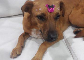 Penelope é um dos animais que aguardam adoção (ONG Cão Sem Dono/Reprodução)